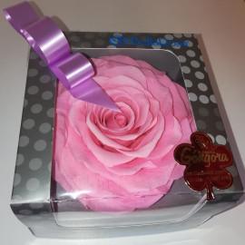 Rosa natural (no requiere agua)