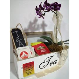 Orquídea mini en caja de TE